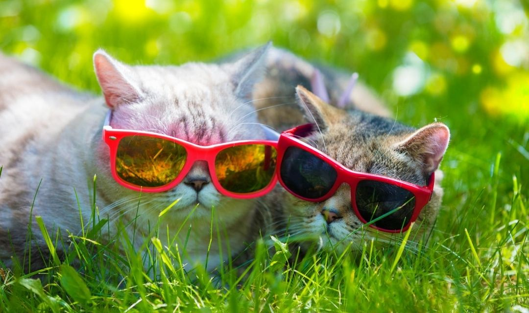 Clinic News: Cool Cats for the Summer 🕶️