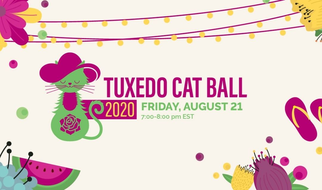 Tuxedo Cat Ball Promo Image with Test - Friday, August 21, 7:00-8:00 pm EST