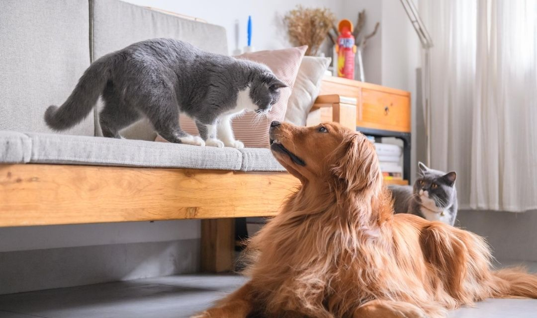 Cat and Dog Touching Nose