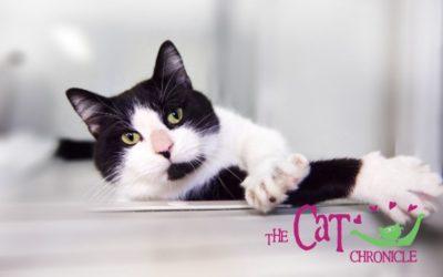 The Cat Chronicle – November 2020