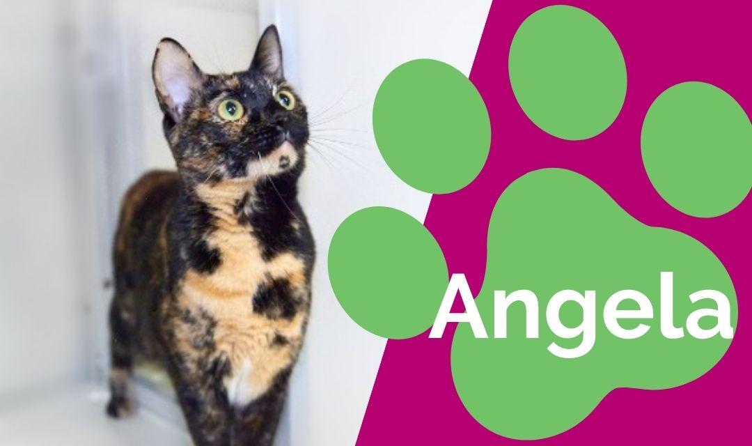 Angela: Sweet & Spunky