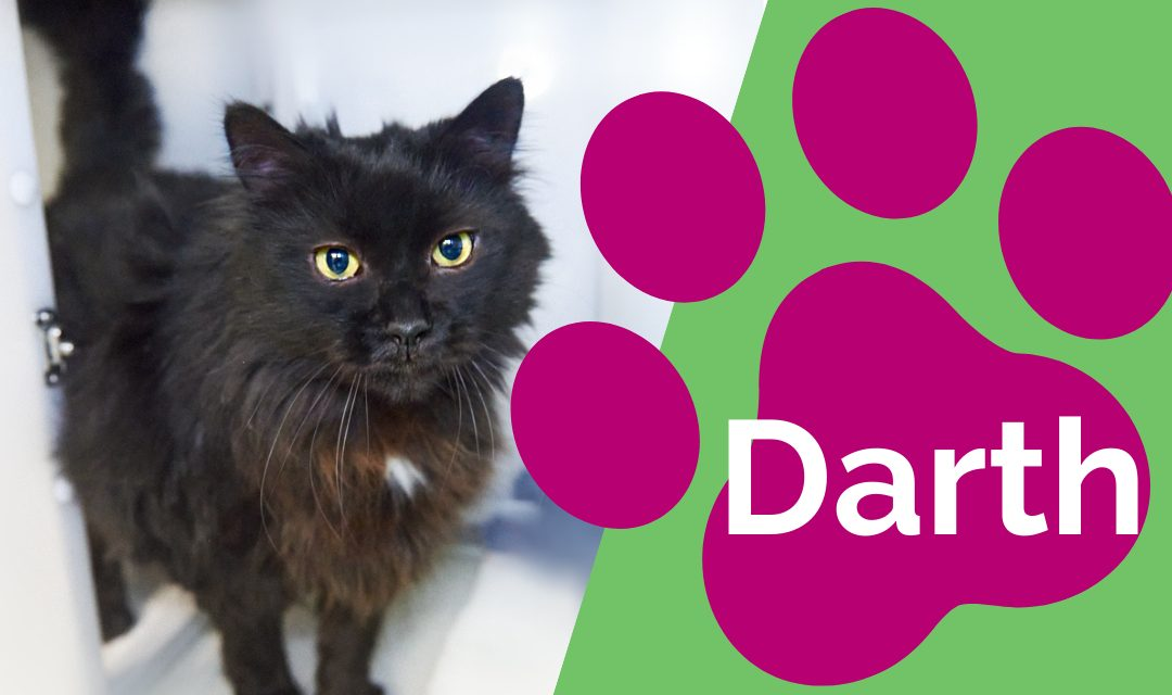 Black cat with pink pawprint - Named Darth