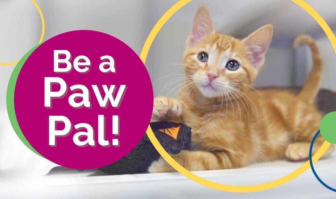Be a Paw Pal