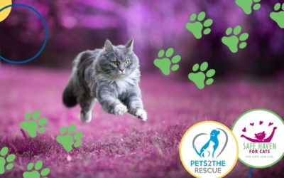 Run, Walk or Bike for the Cats!